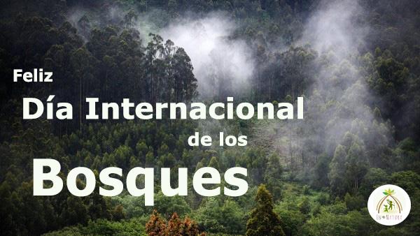 Dia Internacional de los Bosques