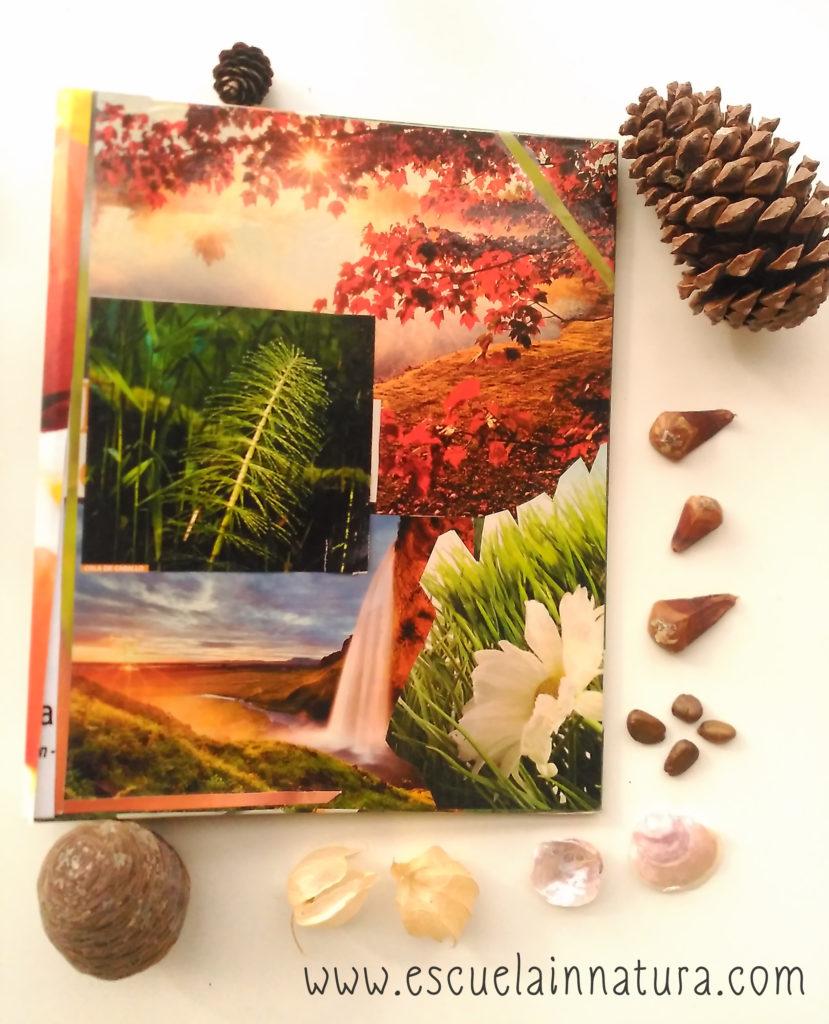 beneficios coleccionar naturaleza