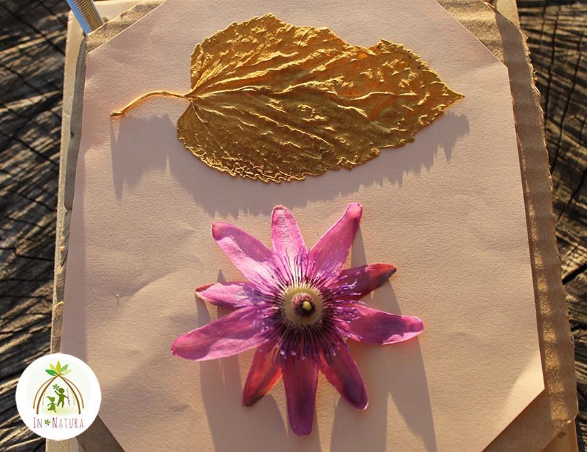recolectar y prensar plantas, flores y hojas