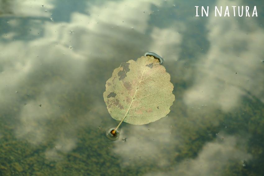 Objetos-que-flotan en charcos