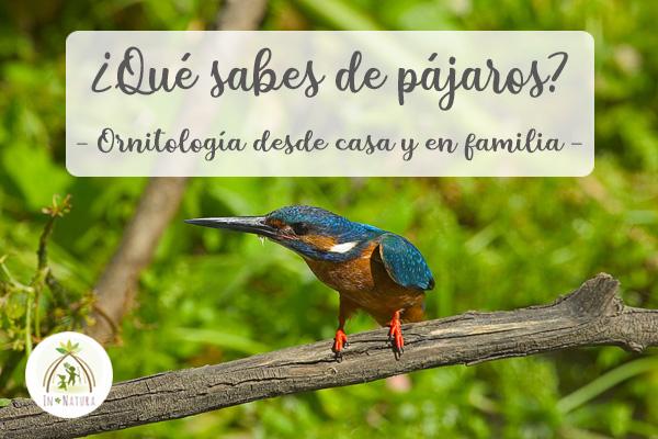 ornitologia desde casa