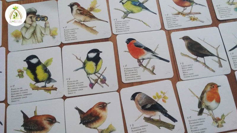 paxaros - cartas de pájaros